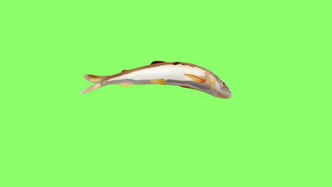 Bouncing sweetfish Animation