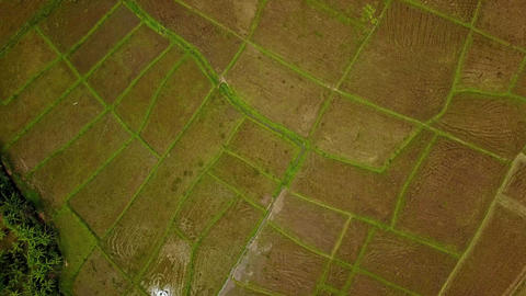 Aerial view of landscape with rice fields. Scenic valley top view panorama 4k Live Action