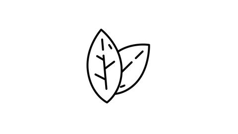 Two Leaves line icon on the Alpha Channel Animation