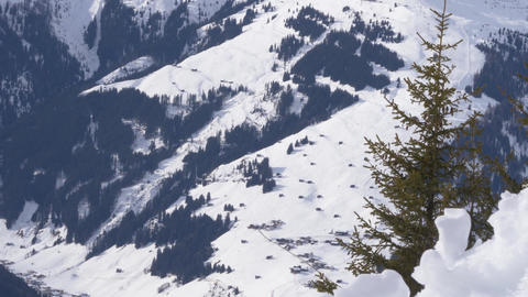 Pine Tree Moves In The Wind Set Against Backdrop Of Snow Covered Valley In Austria Live Action