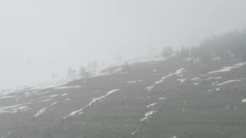 Dense snow flowing over the dreary hills covered with rare trees 20 Live Action