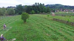 Flight over men mowing hay, green forest hills Footage