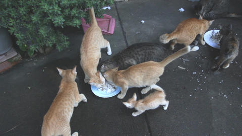 Feeding Stray Cats Footage