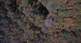 Aerial, Beautiful Autumn Colors In Velebit, Croatia - Native Material Footage