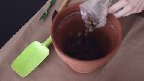 Woman is filling Ceramic flower pot with a substrate for planting indoor plants Live Action