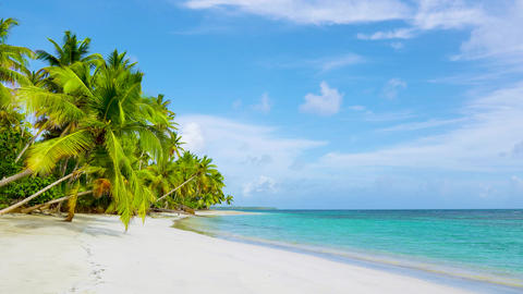 Cuba palm beach and blue sea background. Summer sunny day on clear wild beach Live Action