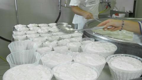 making ricotta cheese in italy: job, fresh, cow, milk ライブ動画