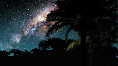 Palms and Milky Way stars at night. Elements of this image furnished by NASA Animation