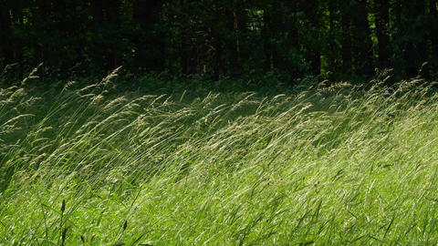 Blades of grass in the wind Live Action