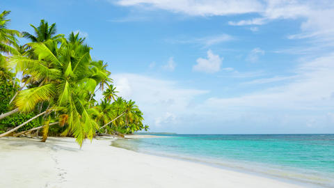 The best beaches in the world. Philippines, palm forest on clear wild beach Live Action
