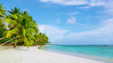 Travel to Cuba beach. Palm beach and clear wave turquoise sea landscape. Relax on the beach. Summer Live Action