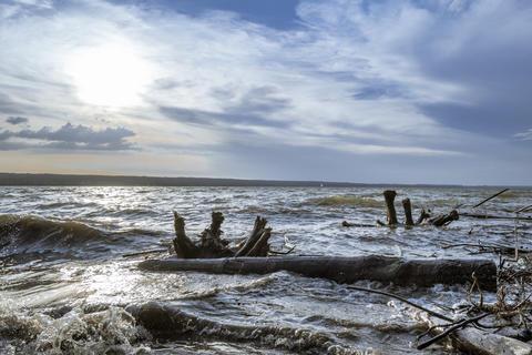 Driftwood after Storm at Ammersee Lake, Bavaria, Germany Fotografía