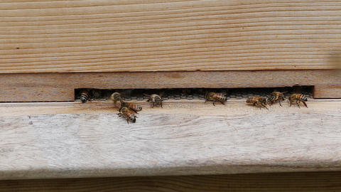 Time lapse of bees flying in and out of a wooden beehive in a UK garden Live Action