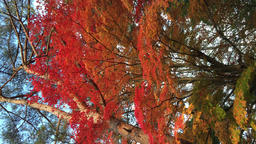 塩嶺御野立公園(えんれいおのだちこうえん)日本一短いお祭 ビデオ