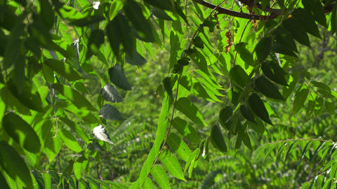 contrasting background texture close-up with blurred background leaves of wood Live Action