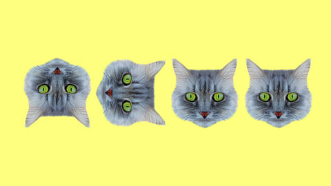 Minimal animation design. Pretty Kitty. Strip lover vibes. Pop and dance mood Animation