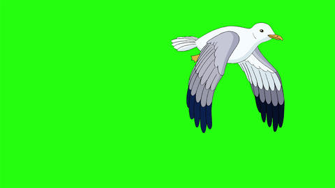 Seagull flies up into the sky chroma key Animation