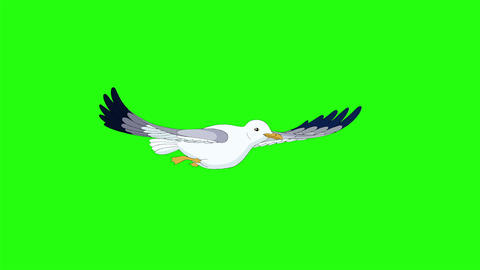 Seagull flies and soars in the sky chroma key Animation
