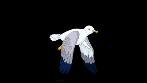 Seagull flies up into the sky alpha mate Animation