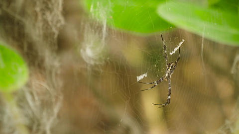 spider on the web Live Action