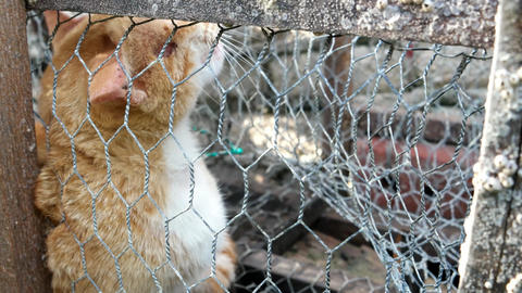 Orange cat in crab trap. Cat lost freedom Live Action