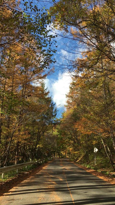 奥木曽湖へ続く道(紅葉) ビデオ
