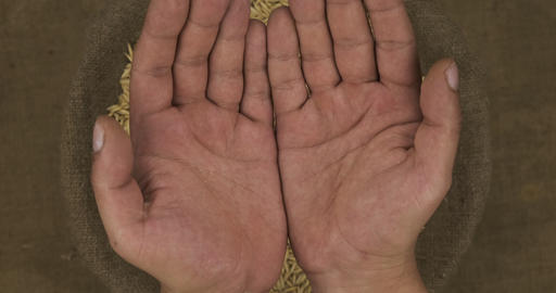 Falling oat grains in human palms on the background of a sack with grain Live Action