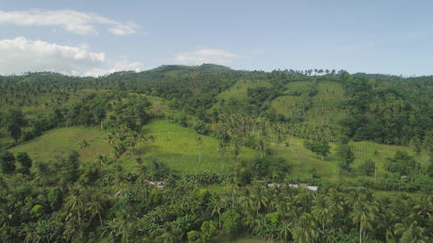 Palms and agricultural land in the mountainous province Live Action