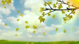 A tree branch with autumn leaves of a maple on a blurred background. Landscape i Animation