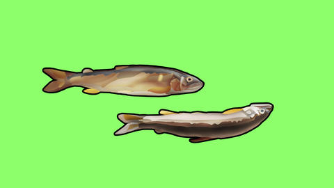 Bouncing sweetfish double2 Videos animados