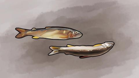二匹の跳ねる鮎4 Bouncing sweetfish double4 CG動画