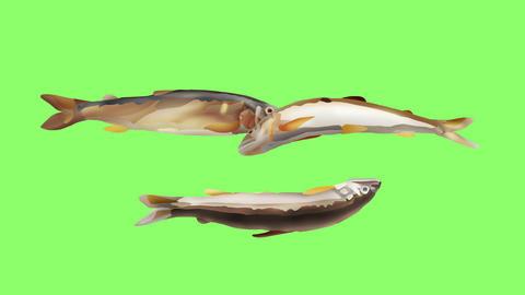 Bouncing sweetfish triple Videos animados
