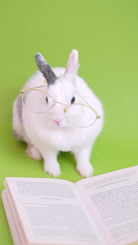 Cute bunny with eyeglasses Live Action