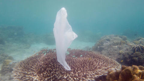 Beautiful coral reef polluted with plastic bag Live Action