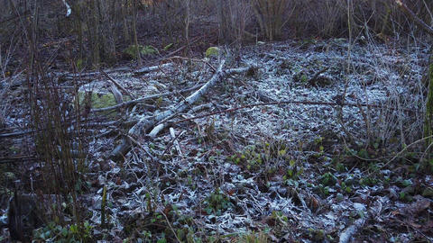 Hoarfrost in a forest, Bavaria, Germany GIF