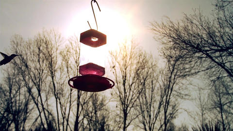 Hummingbirds At Sunset Footage