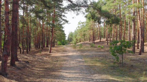 Footpath In Forest GIF