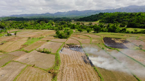 The burning of rice straw in the fields. Smoke from the burning of rice straw in Live Action