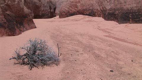 Medium-shot of a barren bush growing in the sandy floor... Stock Video Footage