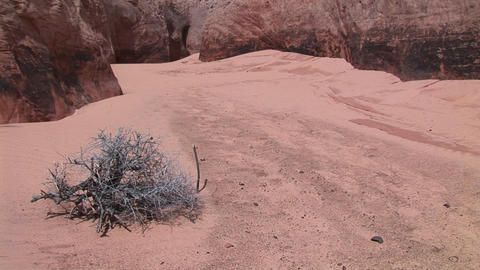 Medium-shot of a barren bush growing in the sandy floor of a granite canyon Footage