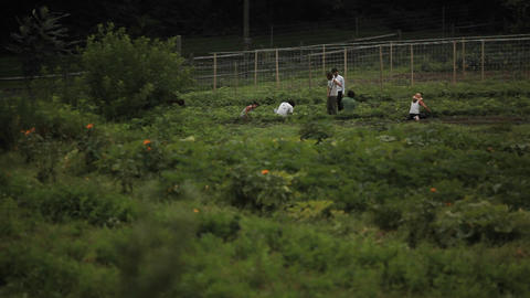 Laborers work in an agricultural field Footage