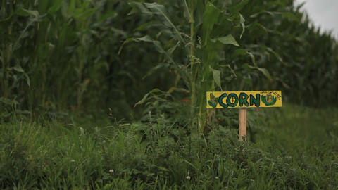 A sign reads 'CORN' in a field on a farm Footage