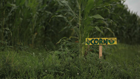 A sign reads 'CORN' in a field on a farm Stock Video Footage