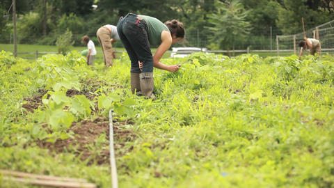 A person works in a community garden wearing galos Stock Video Footage
