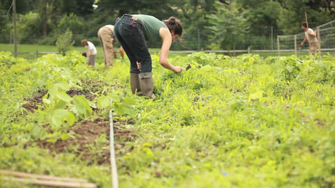 A person works in a community garden wearing galos Footage