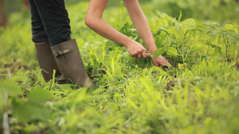 People work in a community garden wearing galoshes Stock Video Footage