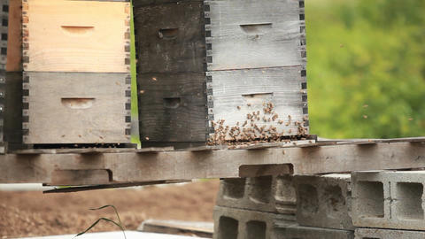 Beekeeper boxes in a garden Footage
