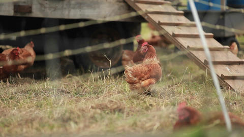 Chickens are seen on a farm through barbed wire Stock Video Footage