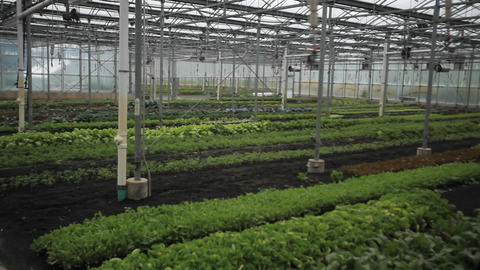 Interior of a greenhouse Footage