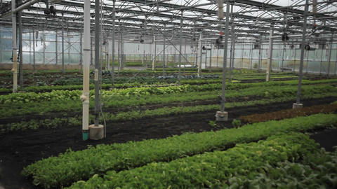 Interior of a greenhouse Stock Video Footage